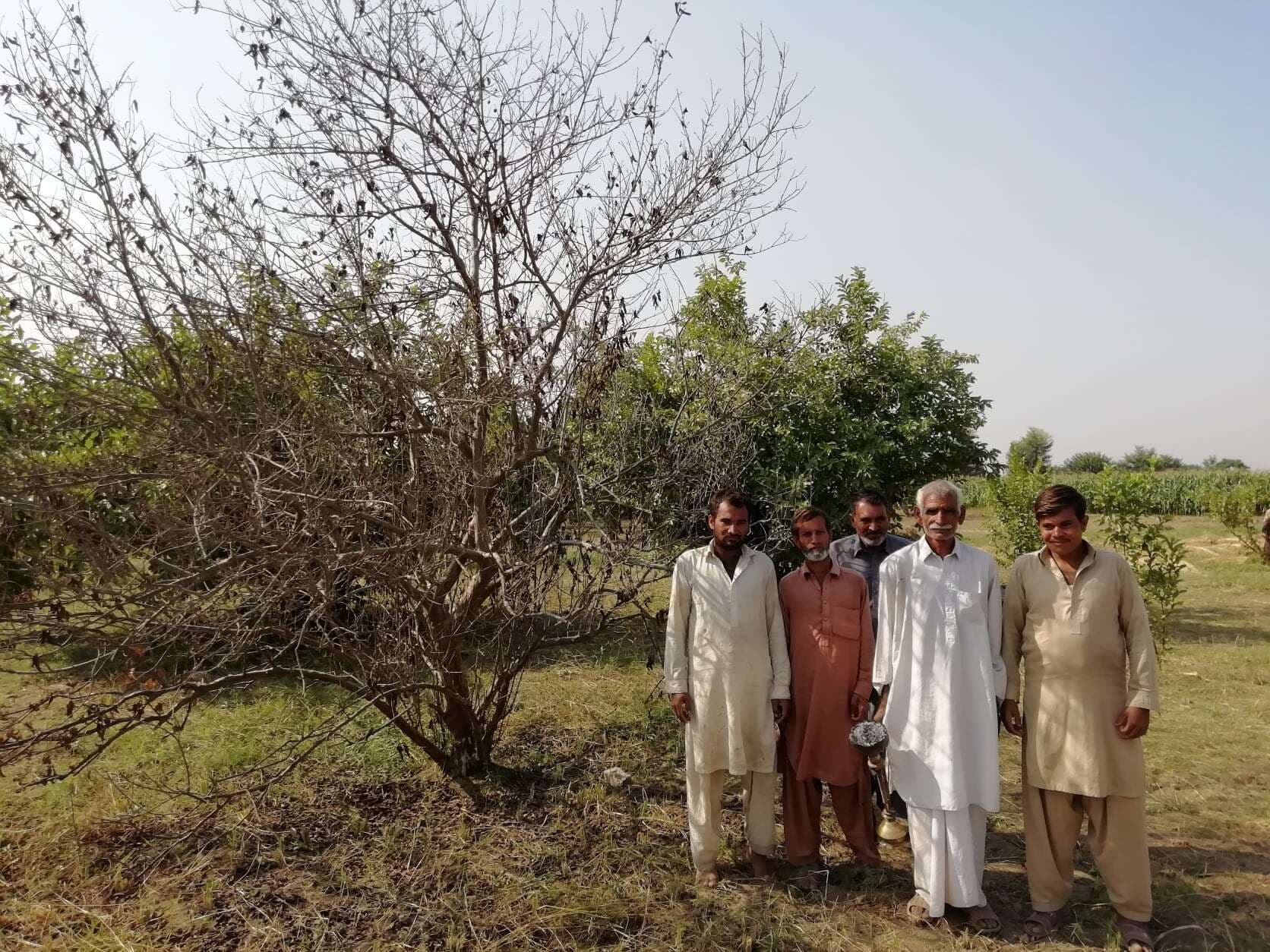 Nazir (second from right) from Chak 76-5R along with other locals standing in front of a guava orchard getting dry due to the power plant