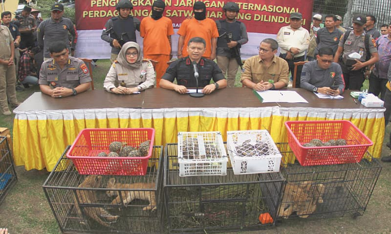Indonesia nabs two suspected smugglers of leopard, lion cubs