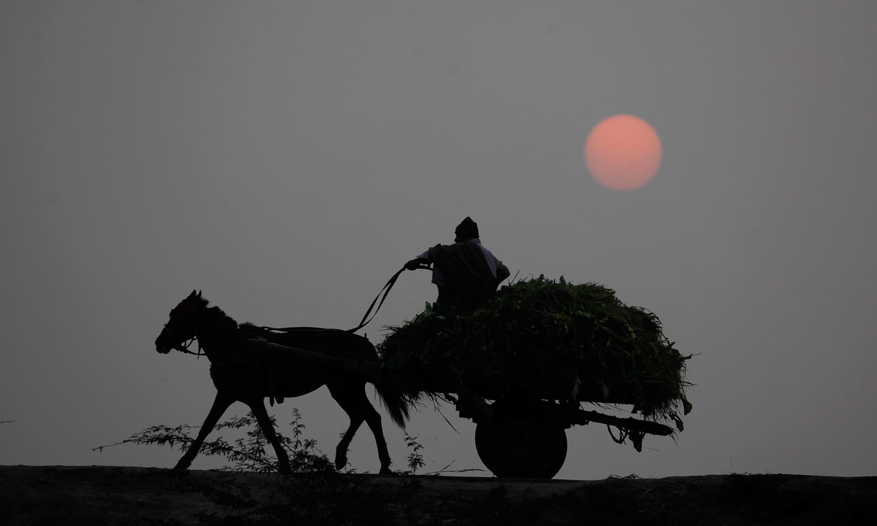 A man rides a donkey cart against the last setting sun of 2019 in Lahore on Tuesday. — AFP