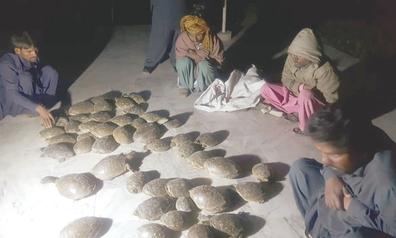 Suspected poachers with the seized turtles.