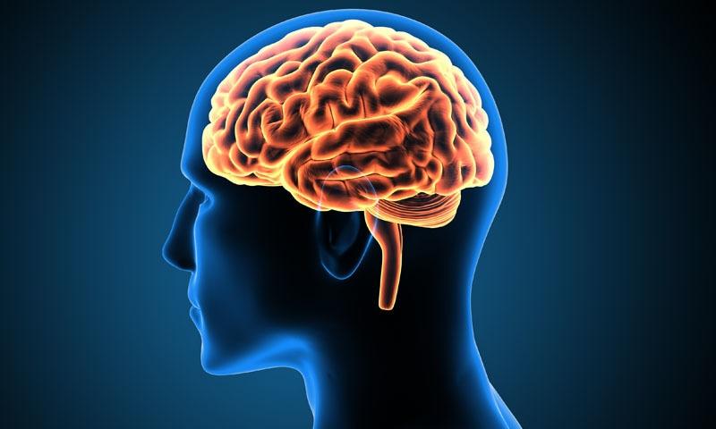 انسانی دماغ کو محفوظ رکھنے میں مختلف عوامل اپنا کردار ادا کرسکتے ہیں —فوٹو: شٹراسٹاک