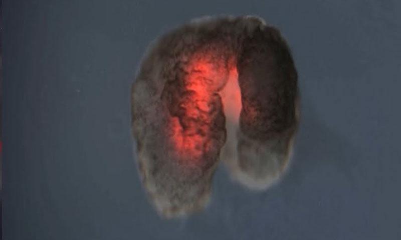 ماہرین نے خلیات کو خاص طرح کی مشین میں ایک دوسرے سے ملایا—اسکرین شاٹ/یوٹیوب
