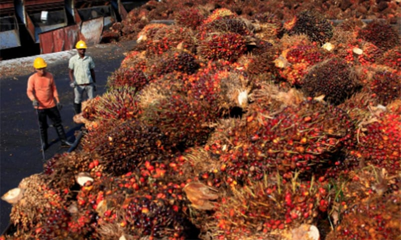 India, the world's biggest buyer of edible oils, last week set restrictions on imports of refined palm oil and informally asked traders to stop importing all kinds of palm oil from Malaysia. — Reuters