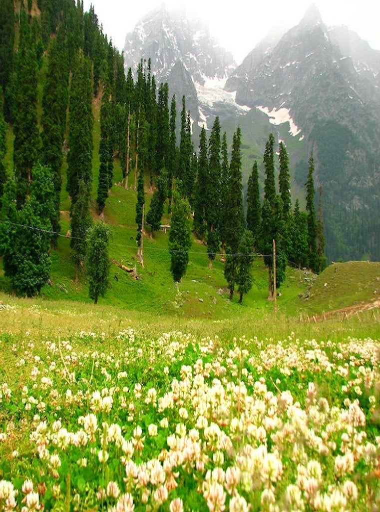The hill station Gulmarg in India-held Kashmir, in spring | kashmirhills.com