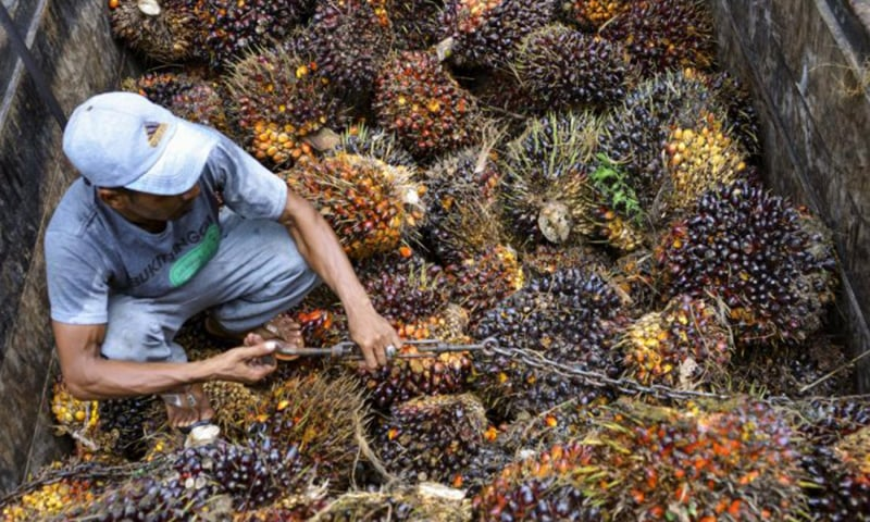 Malaysia is the second biggest producer and exporter of palm oil and India's restrictions on the refined variety of the commodity imposed last week have been seen as a retaliation for the Malaysian PM's criticism of New Delhi. — AFP