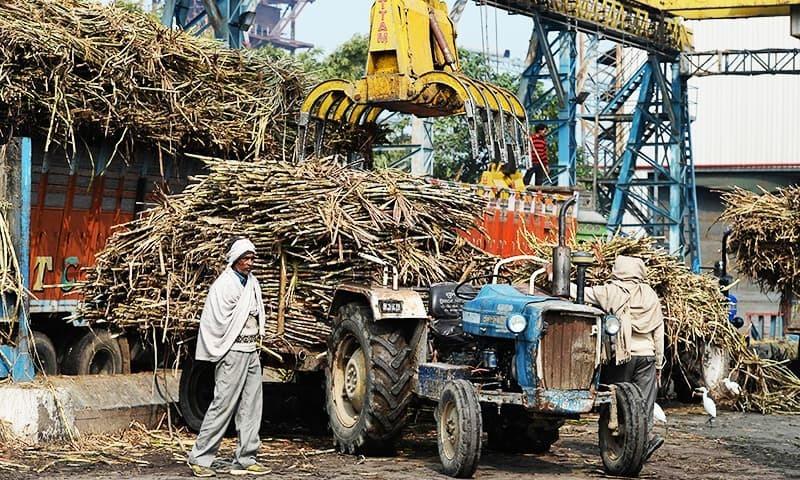 بھارت اور ملائیشیا کے درمیان پام آئل کی درآمد پر تنازع چل رہا—فائل فوٹو: اے ایف پی