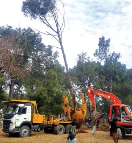 The CDA arranged a transplanting machine from Parks and Horticulture Authority Lahore to shift the trees. — File photo