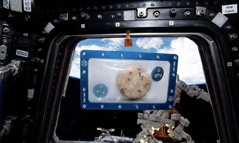 خلا میں دسمبر 2019 میں غذا تیار کرلی گئی تھی—فوٹو: ناسا