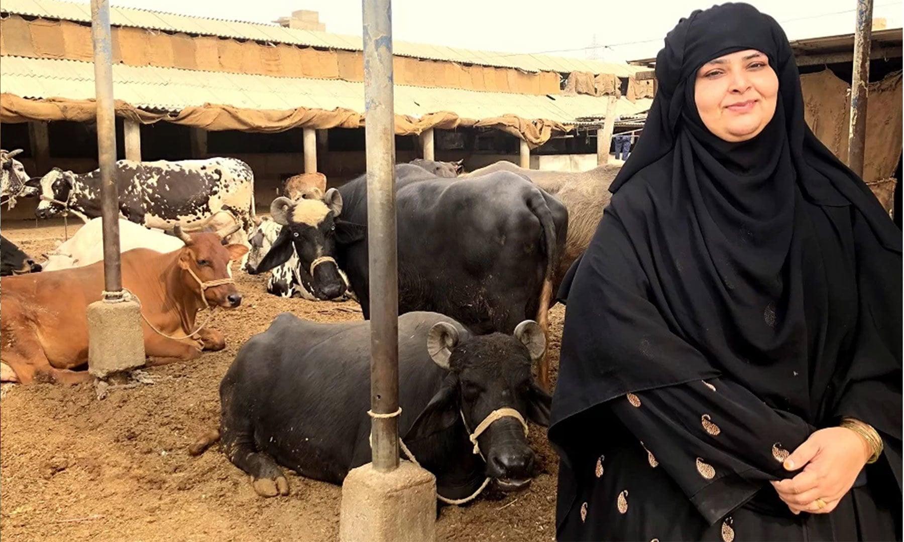یاسمین برکت اور ان کے مویشی—تصویر بشکریہ ذوفین ابراہیم