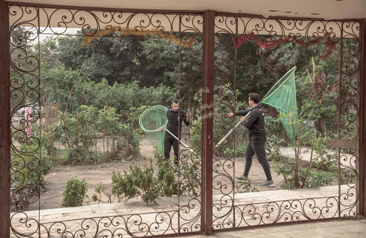 CAIRO: Volunteers carry nets to catch dogs and give them rabies shots.—AP