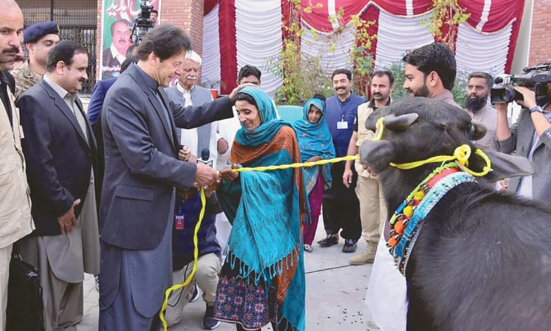 LAYYAH: Prime Minister Imran Khan gives away a buffalo to a woman at a ceremony to distribute assets among the beneficiaries of Ehsaas Aamdan programme.—INP
