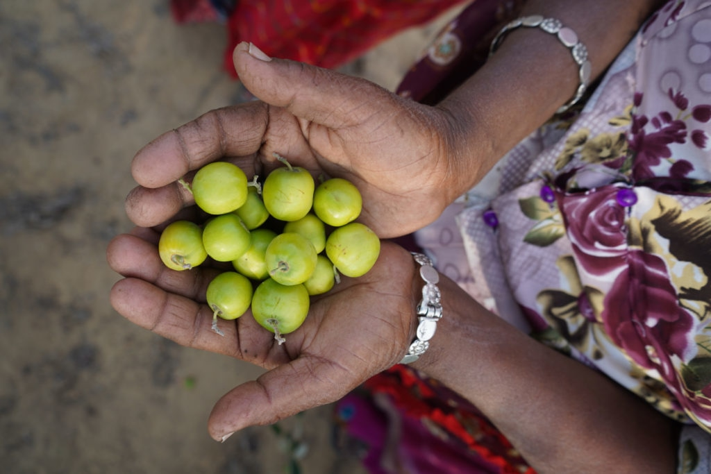 Berries from the deserts of Pakistan