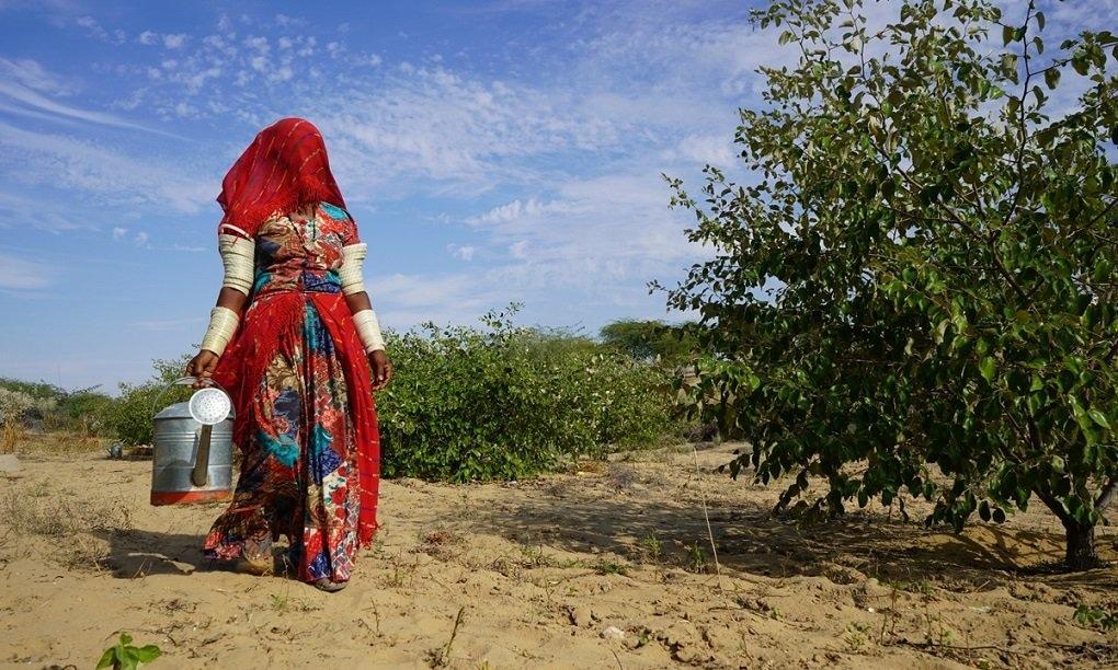 ڈھیلی اپنے پودوں کو پانی دینے کے لیے جا رہی ہیں—تصویر منوج گینانی