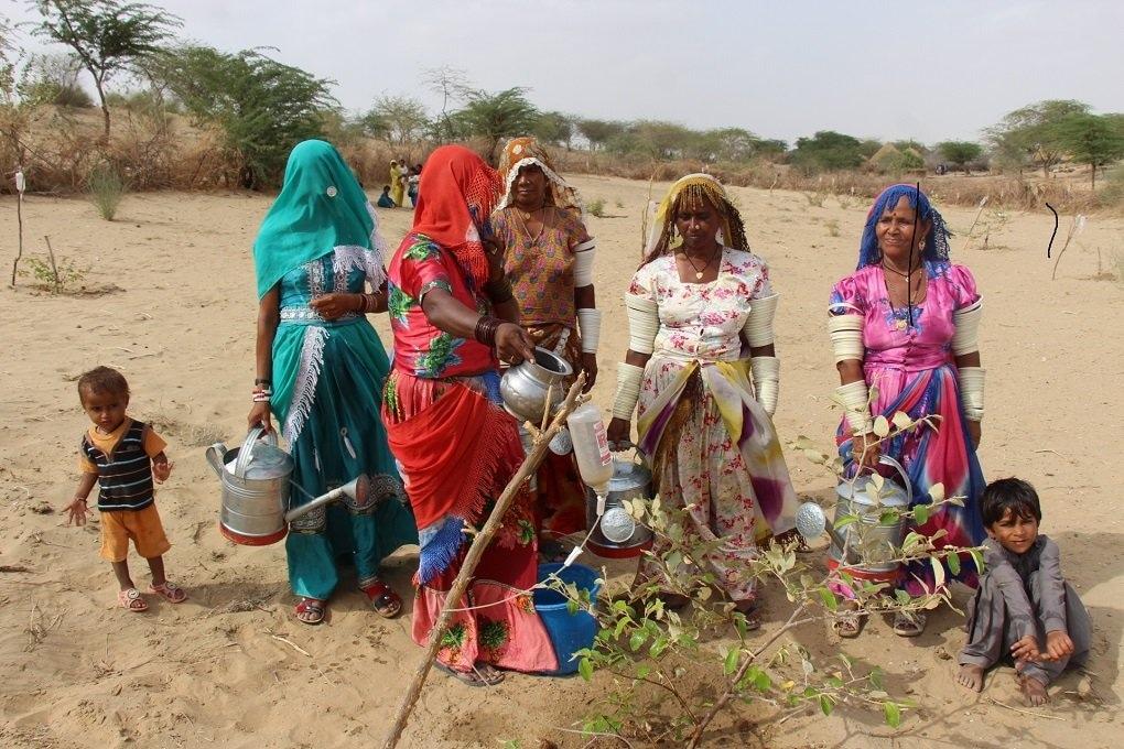 یہ تصویر 2016ء کی ہے جب اس پودے کی عمر ایک سال تھی۔ تصویر میں خواتین کو ان ڈرپوں میں پانی انڈیلتے ہوئے دیکھا جاسکتا ہے جو آہستہ آہستہ پودے کی ضرورت کو پورا کرتی ہیں—تصویر منوج گینانی