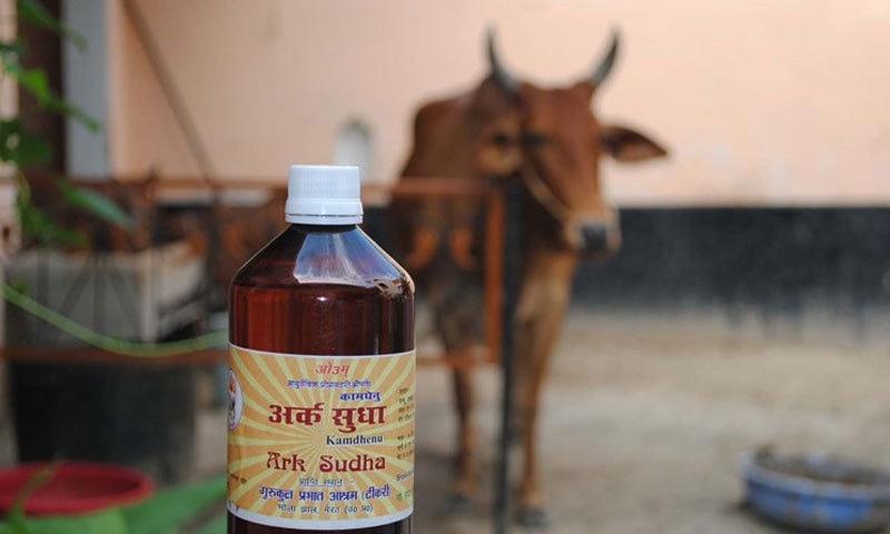 'گائے کا پیشاب پینے اور گوبر کھانے' سے 'کورونا' ختم ہوجاتا ہے، ہندو رہنما