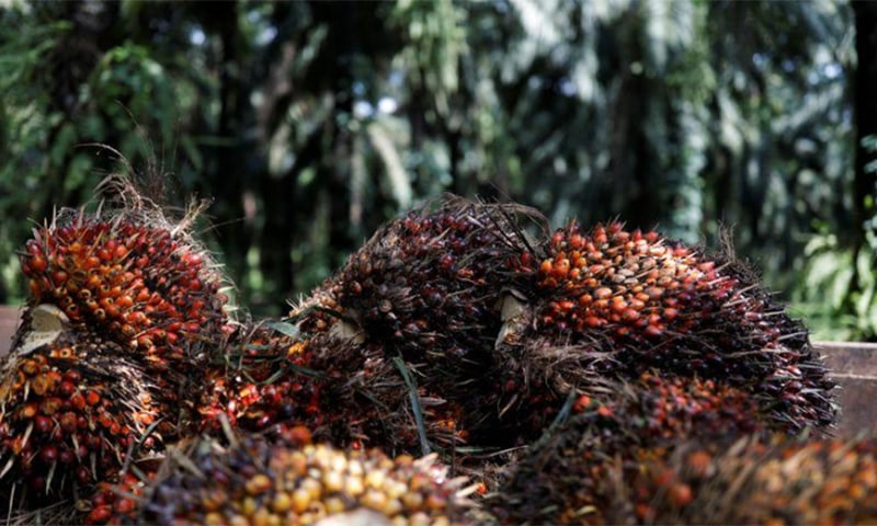 Malaysia aims to resolve palm oil spat with India within month's time