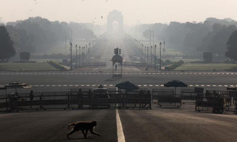 A monkey crosses an empty road near India's Presidential Palace on Sunday. —Reuters