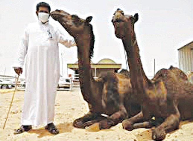 Saudi Arabia was the focal point of the MERS outbreak which traced back to dromedary camels bred in the industrialising camel sector of the Middle East | Reuters