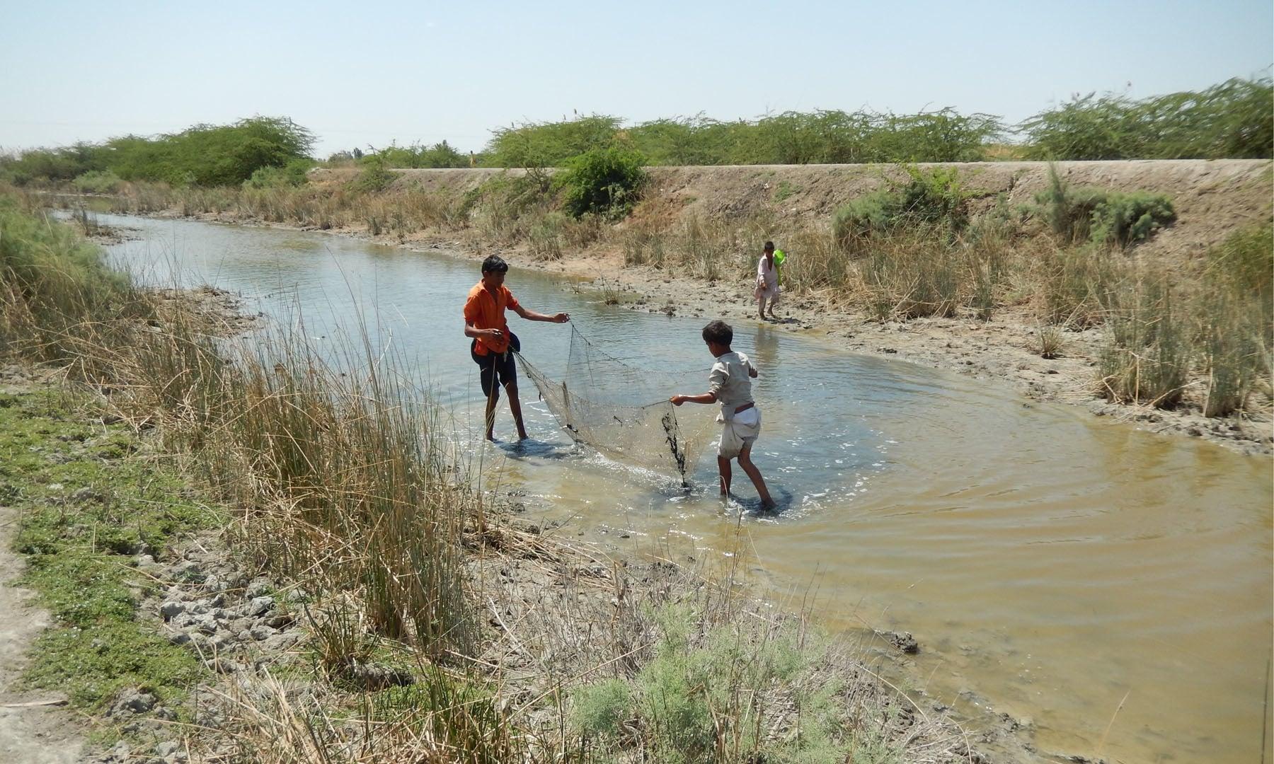 مچھلیاں پکڑنے میں مصروف بچے