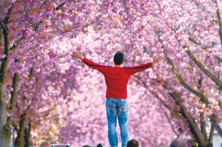 A man stands under blooming cherry trees on the Heerstrasse street in Bonn, western Germany, on Sunday amid the spread of the novel coronavirus. The cherry blossom street in Bonn became famous after photographers started posting pictures of it on the web in the 1980s.—AFP