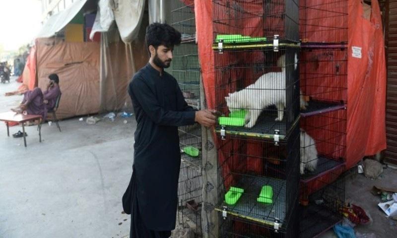 اب صوبائی حکومت نے فلاحی تنظیموں کو جانور و پرندوں کو امداد فراہم کرنے کی اجازت دے دی—فوٹو: اے ایف پی