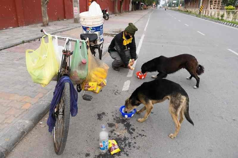 In this photograph taken on March 26, 2020 a social activist feeds street dogs during a government-imposed nationwide lockdown as a preventive measure against the coronavirus in Amritsar. — AFP