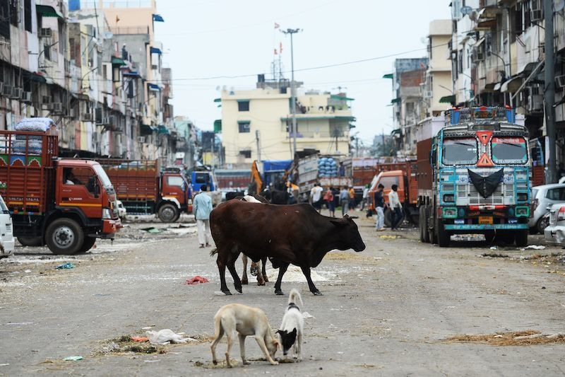 In this photograph taken on March 26, 2020, a cow and stray dogs stand along a deserted street at a wholesale vegetable market during a government-imposed nationwide lockdown as a preventive measure against the coronavirus in New Delhi. — AFP