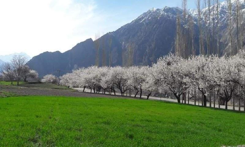 اس وقت شمالی علاقہ جات سمیت ملک بھر کی خوبصورت وادیوں میں بہار کا موسم اپنے جوبن پر ہے— تصویر عظمت اکبر