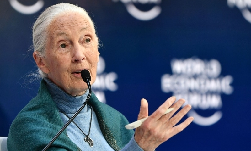 In this file photo taken on January 22 Jane Goodall speaks at the Securing a Sustainable Future for the Amazon, during the World Economic Forum in Davos. — AFP