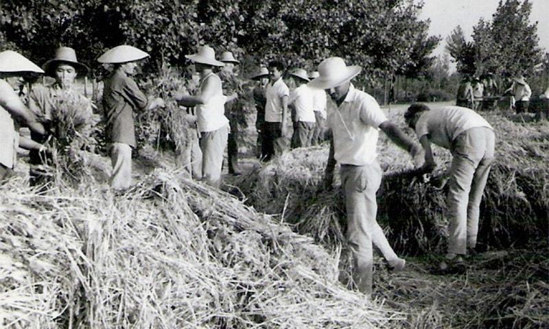 چینی ثقافتی انقلاب کے دوران احفاظ الرحمٰن چینی کسانوں کے ساتھ کام کرتے ہوئے