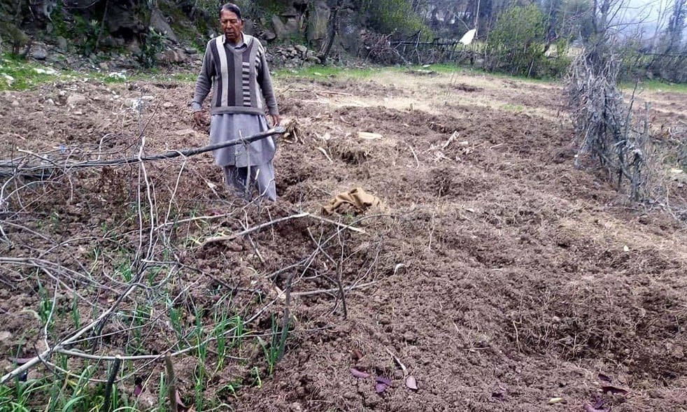 A farmer standing in his field destroyed by a herd of wild boar in Bakot area of Nathigali in Abbottabad district. — Photo by writer