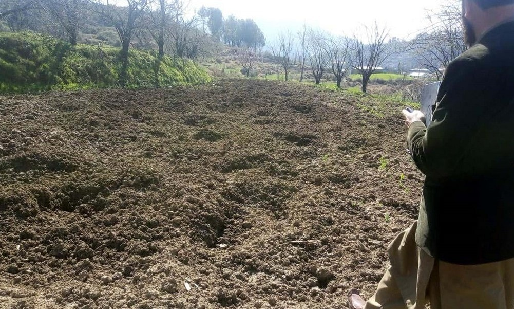 An official of the agriculture department inspecting a farm destroyed by wild boar in Darband area of Manshera district. — Photo by writer
