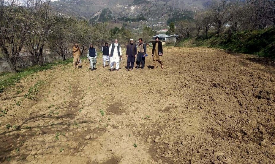 A team comprising officials from the agriculture department and the Deputy Commissioner's office inspect farm land rampaged by wild boars in Darband area of Manshera district. — Photo by writer