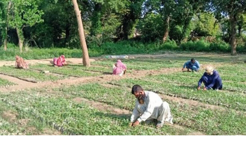Labourers planting trees near Islamabad. – Photo courtesy Shahid Rashid Awan, Project Director (Punjab) TBTTP
