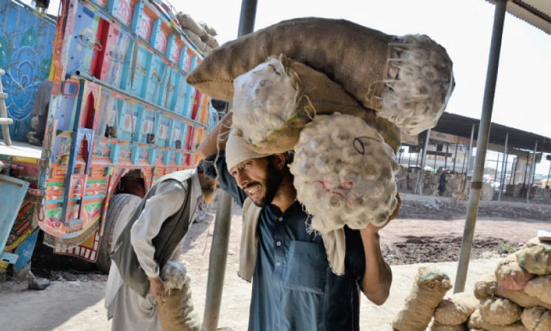A worker loads garlic bags onto a truck at the fruit and vegetable market in Phando area of Peshawar on the International Labour Day. — White Star