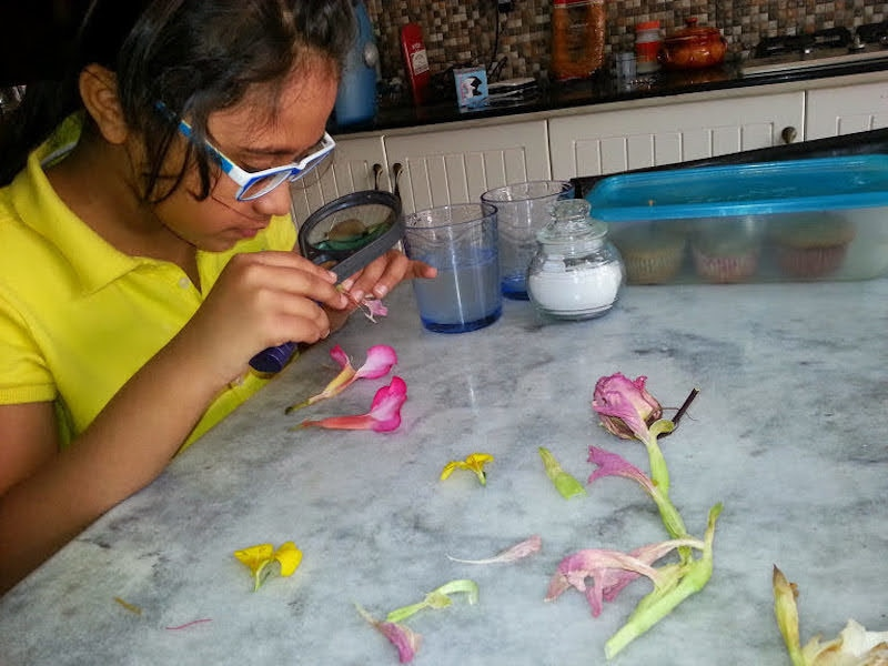 Hafsa Naeem's daughter, Safia Iqbal, dissecting flower at home | Courtesy Hafsa Naeem