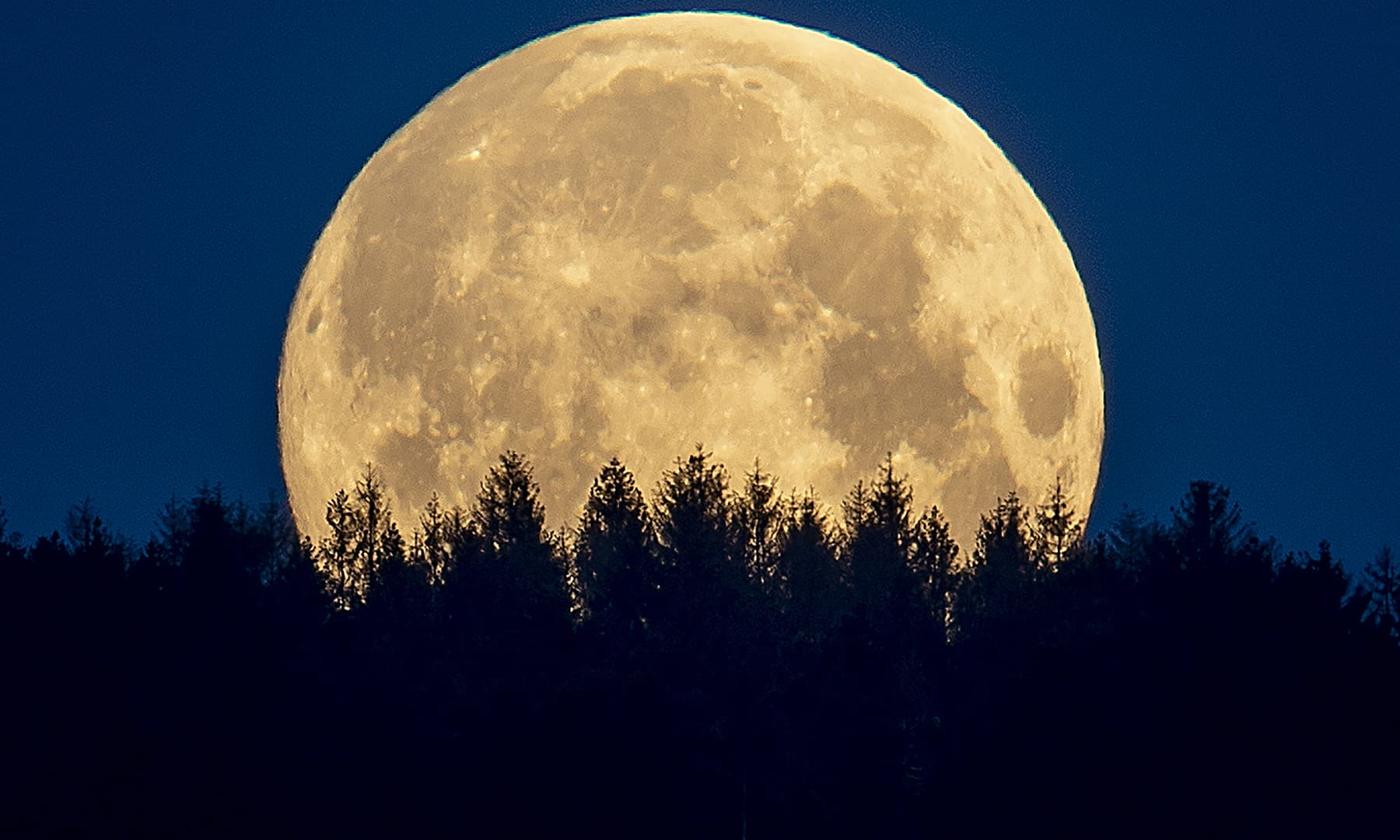 The full moon sets behind trees in the Taunus region near Frankfurt, Germany, Thursday. — AP