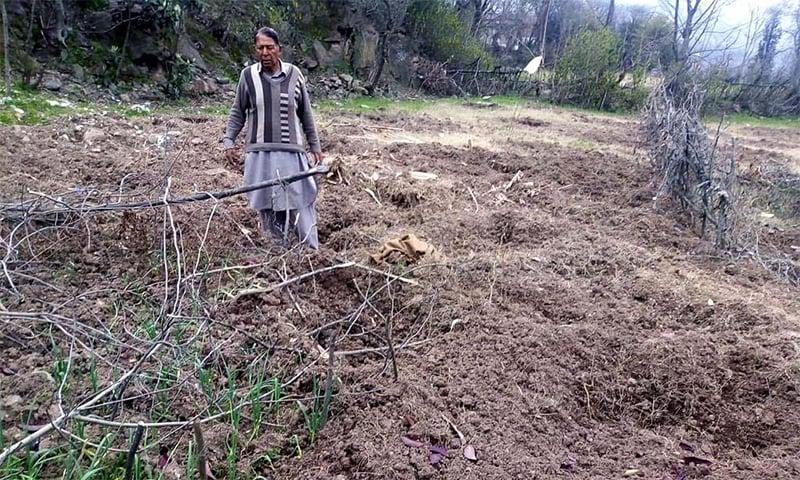 نتھیاگلی کے علاقے بکوٹ میں ایک کسان جنگلی سؤر کے ریوڑ سے تباہ ہونے والے اپنے کھیت میں کھڑا ہے—فوٹو: عدیل سعید