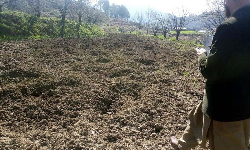 محکمہ زراعت کا ایک اہلکار ضلع مانسہرہ کے علاقے دربند میں جنگلی سؤر سے تباہ شدہ کھیت کا معائنہ کر رہا ہے—فوٹو: عدیل سعید