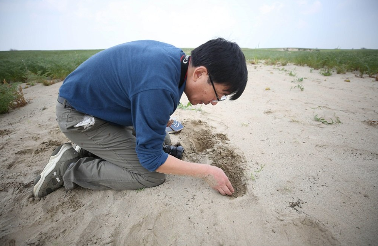 Chinese expert Zhang Long searches for eggs of locusts in Khushab, March 2, 2020. The government of China sent an emergency response team of experts to Pakistan to help control the locust plague. The experts have visited almost all affected areas. — Photo by Liu Tian/Xinhua/Alamy Live News