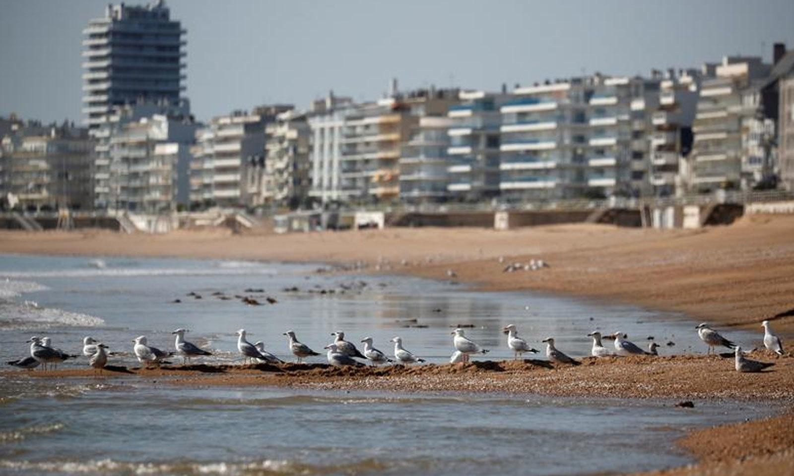 فرانس میں کورونا وائرس کے باعث ویران ساحل پر پرندوں نے ڈیرا ڈالا ہوا ہے—فوٹو: رائٹرز