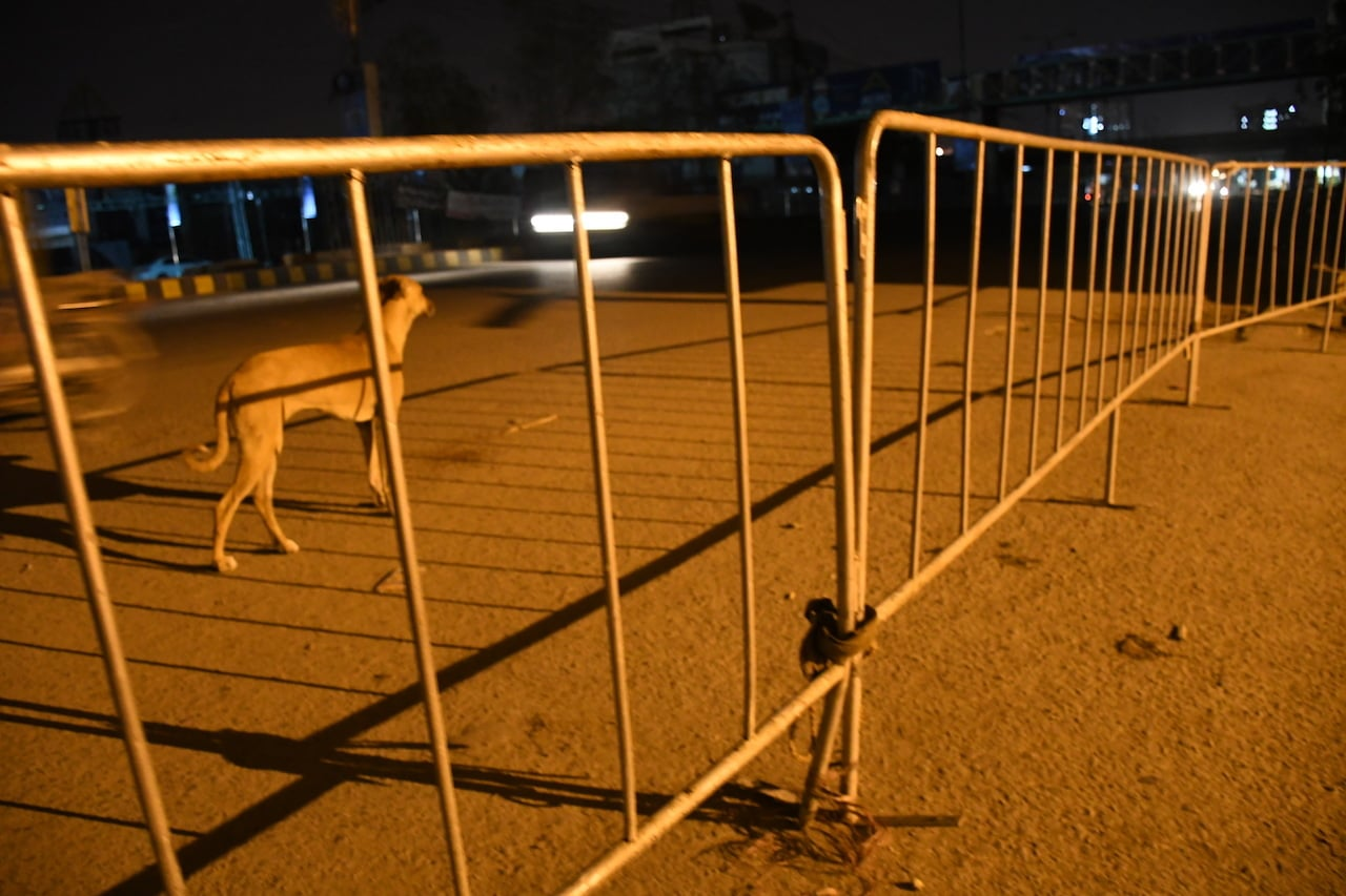 A stray dog behind a barricade in Karachi | Faysal Mujeeb/White Star