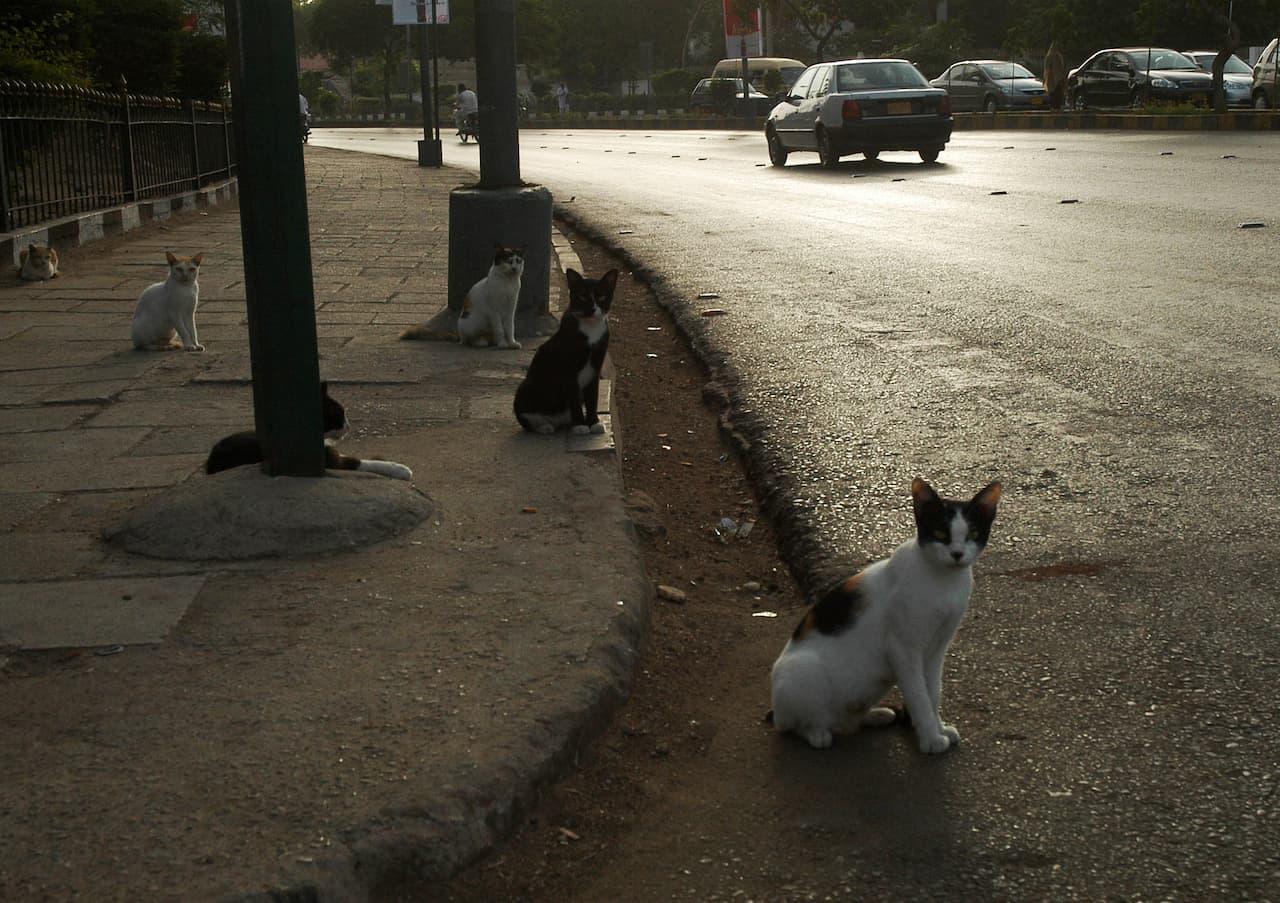 Cats on a sidewalk | Faysal Mujeeb/White Star