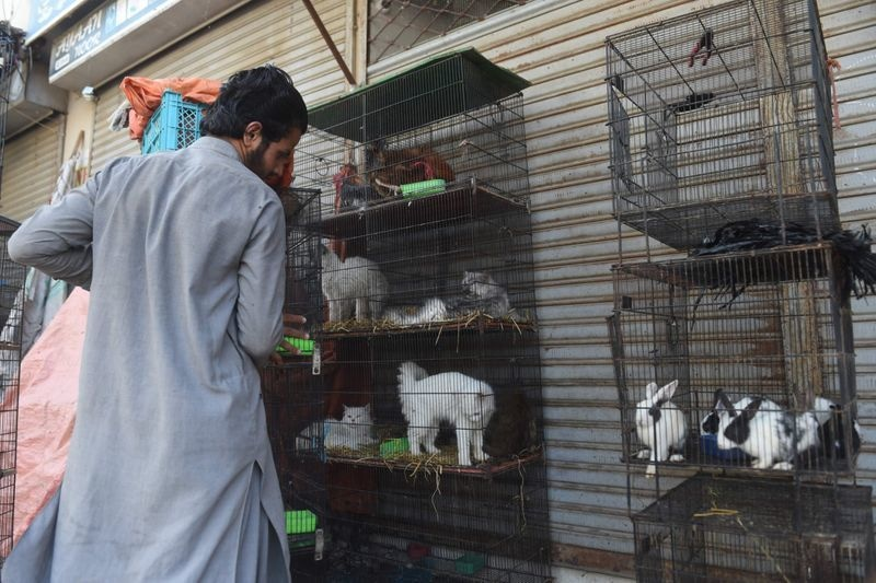 A vendor moves caged animals outside his closed shop during the government-imposed lockdown | AFP