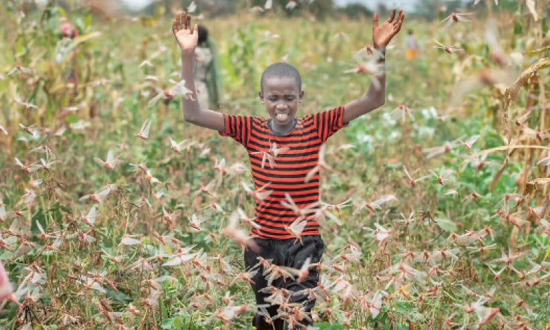 A FARMER'S son (left) raises his arms as he is surrounded by desert locusts while trying to chase them away from his crops in Katitika village, Kenya. Mine workers (right) wearing face masks arrive ahead of their shift at a mine of Sibanye-Stillwater company in Carletonville, South Africa.—Agencies