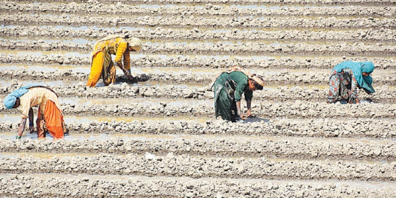 farmers manually prepare land for next crop in Katcha area of Indus river. —APP