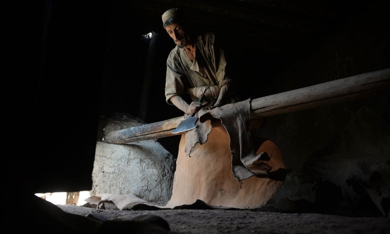 Duty drawback rate for cow, buffalo or camel's hide has been increased to 3.73pc from 1.17pc. — AFP/File