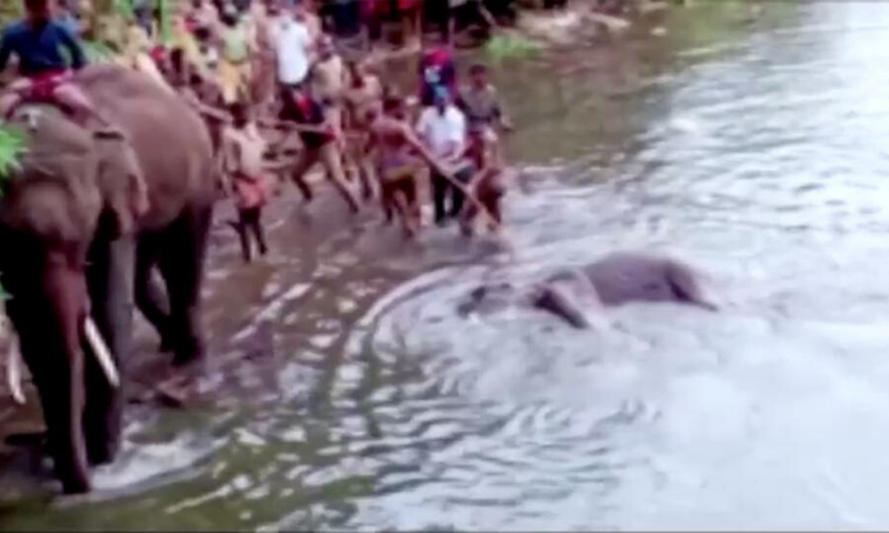 People pull the body of a dead pregnant elephant out of the water, after the animal was allegedly fed with firecracker-stuffed pineapple and died, in Malappuram, India, May 27, 2020 in this still image taken from a video. — Reuters