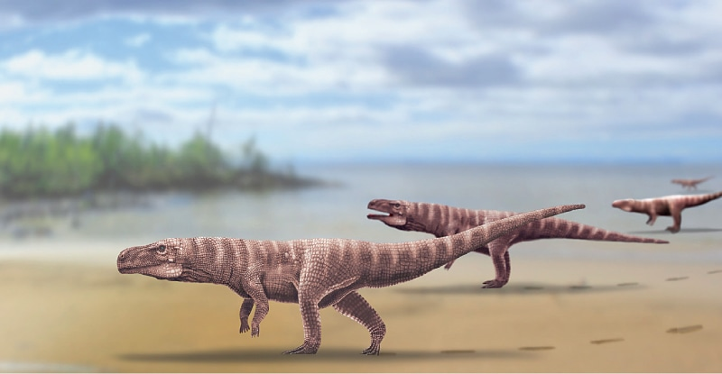 DENVER (US): A handout photo made available by the University of Colorado on Friday shows an artist's impression of the crocodile's ancestor after fossilised footprints were unearthed by researchers in South Korea.—AFP