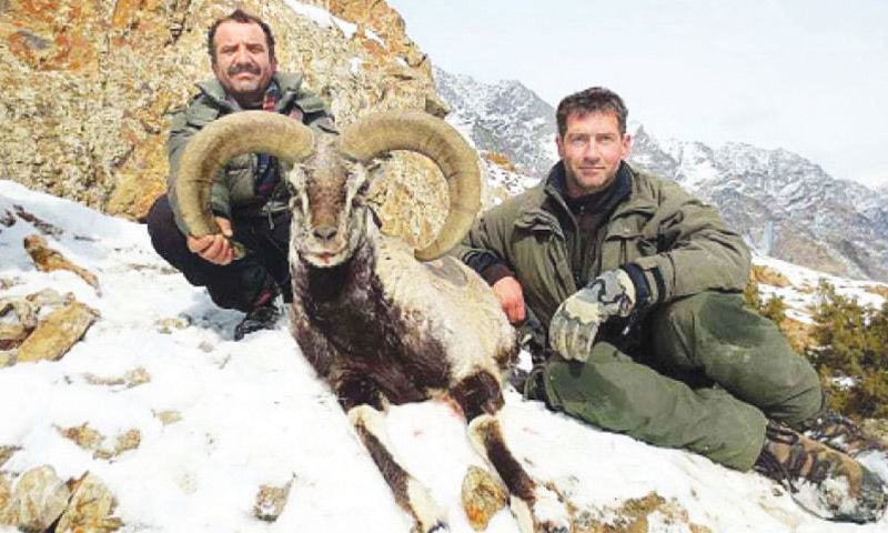 From December till March end, foreigners come to hunt urial for sport, under official patronage. The permit fee for one animal is 18,000 dollars | Dawn file photo